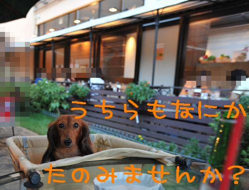20098Mjokers_7.jpg