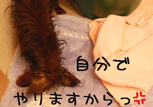 2009shampoo_2.jpg