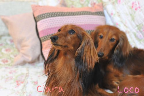clara1stbirthday_3.jpg
