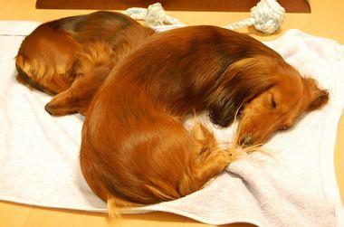 恒例:団子犬