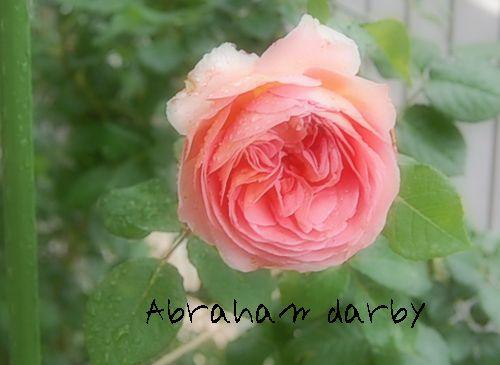 'アブラハム・ダービー'2009.6.3