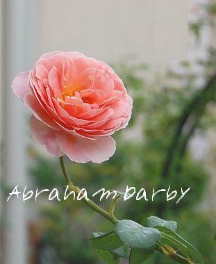 darby67.jpg