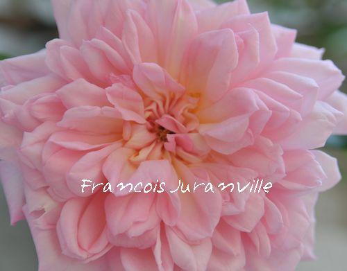 フランソワ・ジュランビル'2009.5.10撮影