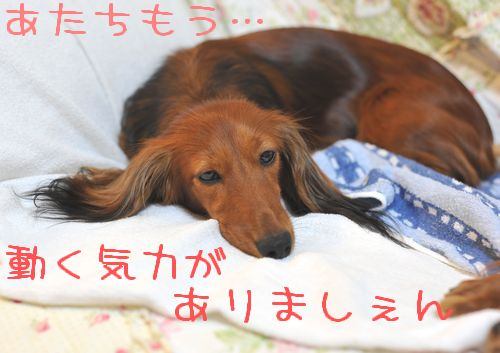 machida_10.jpg