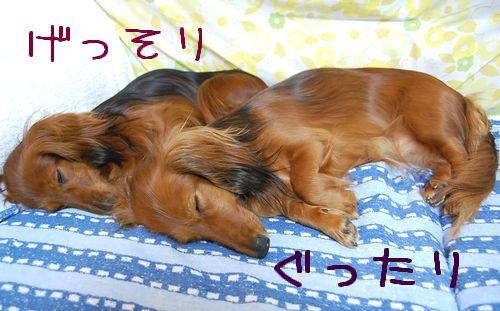 machida_3.jpg