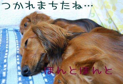 machida_4.jpg
