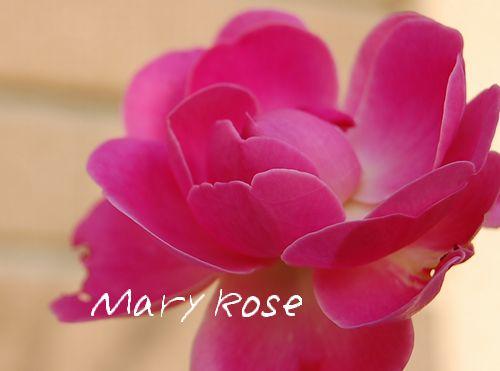 maryrose22.jpg