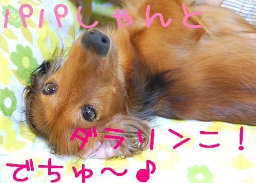 obon2009_5.jpg