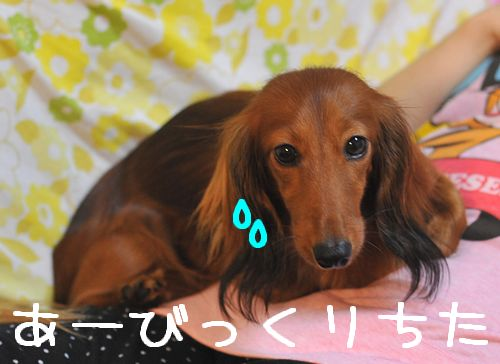 obon2009_6.jpg