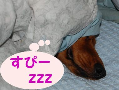 寝つきが良すぎるロコたん