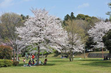 ワンコと桜とパパ6