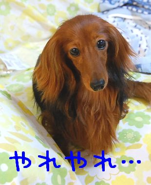 pinchi_2.jpg