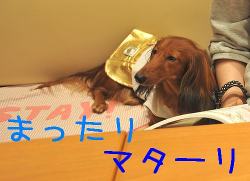threedog_3.jpg