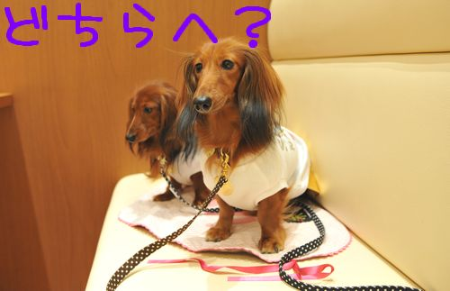 threedog_6.jpg