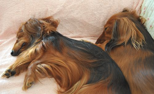threedog_8.jpg