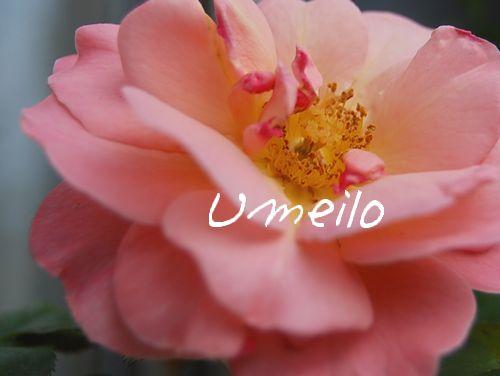 umeilo110714.jpg