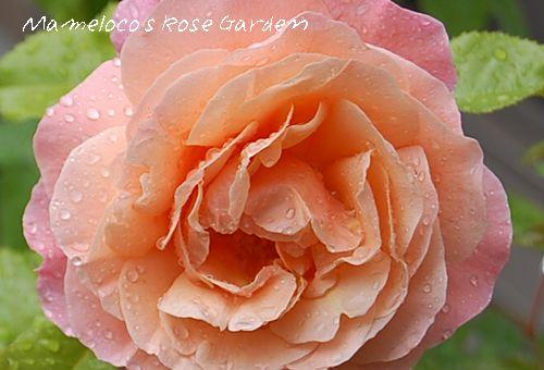 'ウーメロ'2009.5.5_2撮影