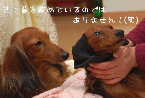 wanfuku200911M_2.jpg