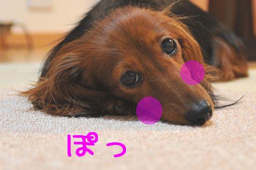 zenyasai_1.jpg