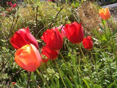 春のやきもの祭