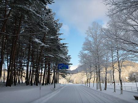 県民の森07(2011.12.21)