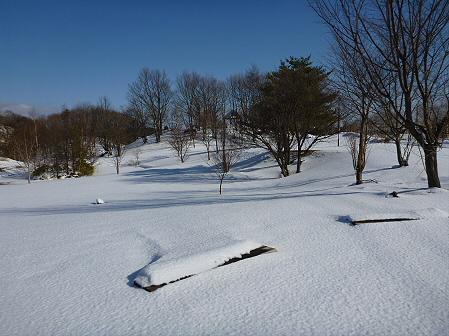 深雪のさくら公園04(2012.1.19)