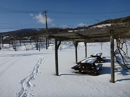 深雪のさくら公園05(2012.1.19)