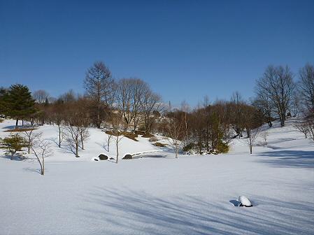深雪のさくら公園06(2012.1.19)