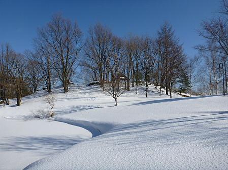 深雪のさくら公園08(2012.1.19)
