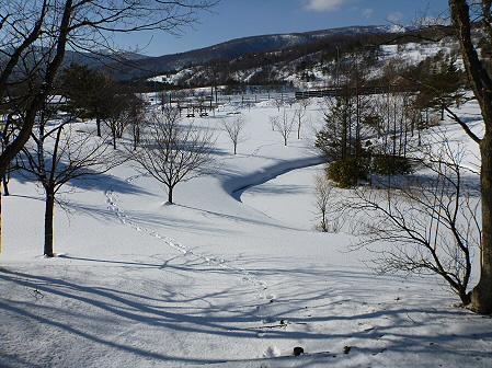 深雪のさくら公園10(2012.1.19)