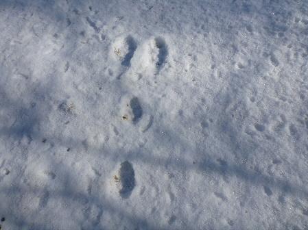 深雪のさくら公園11(2012.1.19)