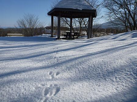 深雪のさくら公園12(2012.1.19)
