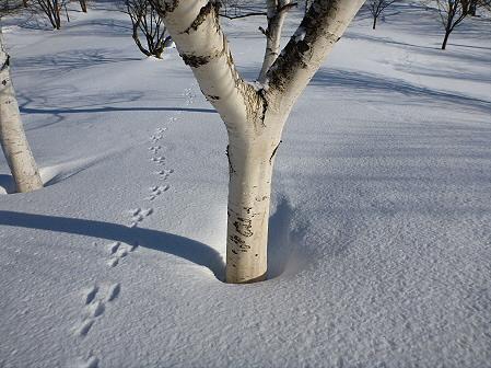 深雪のさくら公園13(2012.1.19)