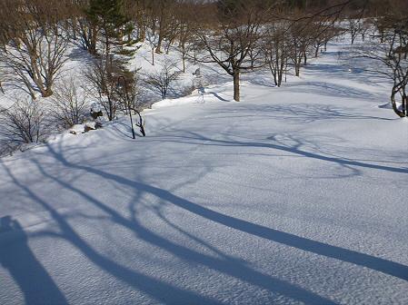 深雪のさくら公園16(2012.1.19)