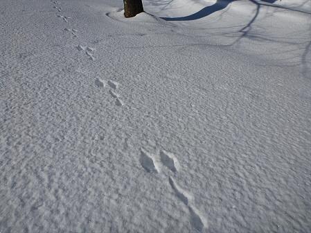 深雪のさくら公園17(2012.1.19)