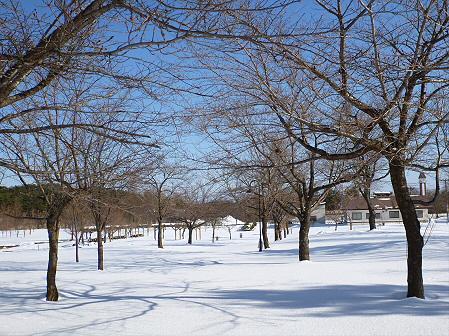 深雪のさくら公園19(2012.1.19)