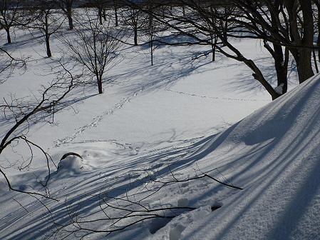 深雪のさくら公園20(2012.1.19)