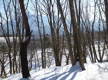 深雪のさくら公園21(2012.1.19)