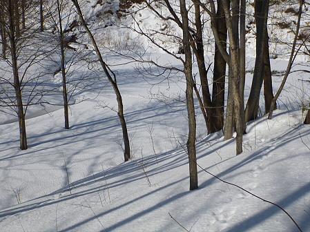 深雪のさくら公園25(2012.1.19)