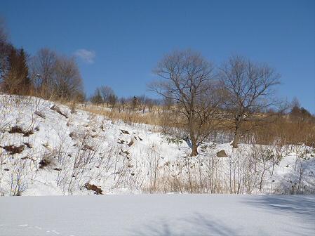 深雪のさくら公園26(2012.1.19)