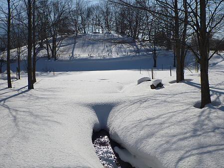 深雪のさくら公園27(2012.1.19)