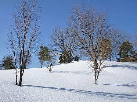 深雪のさくら公園31(2012.1.19)