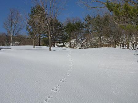 深雪のさくら公園33(2012.1.19)