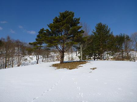 深雪のさくら公園34(2012.1.19)
