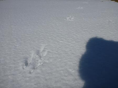 深雪のさくら公園35(2012.1.19)