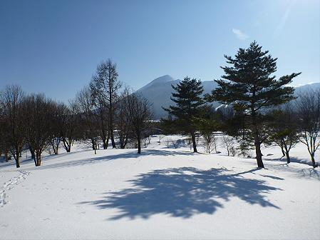 深雪のさくら公園36(2012.1.19)