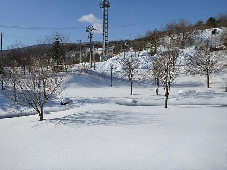 深雪のさくら公園37(2012.1.19)