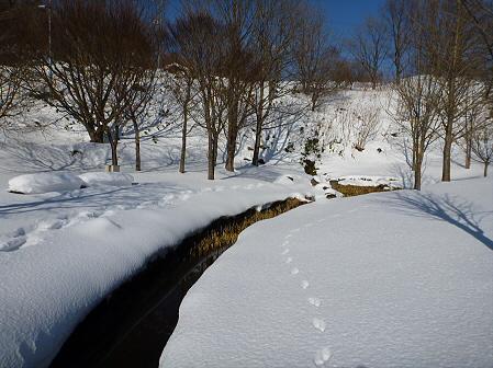 深雪のさくら公園38(2012.1.19)