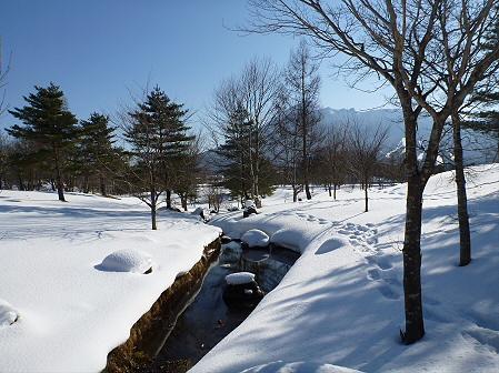 深雪のさくら公園39(2012.1.19)