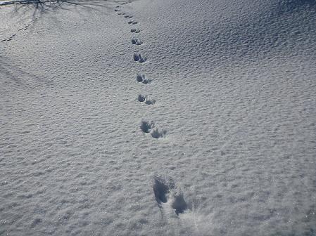 深雪のさくら公園40(2012.1.19)